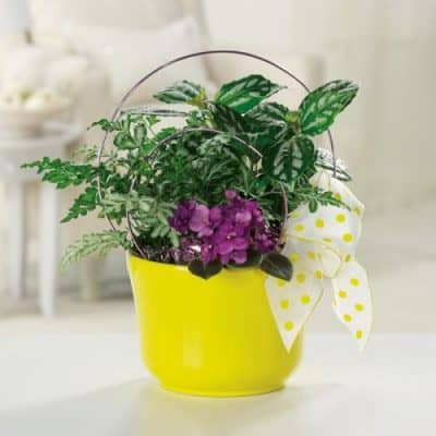 """Mini Garden Planter"""