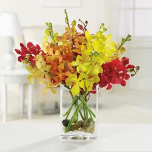 """Orchids Galore"""