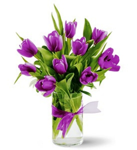 """Passionate Purple Tulips"""