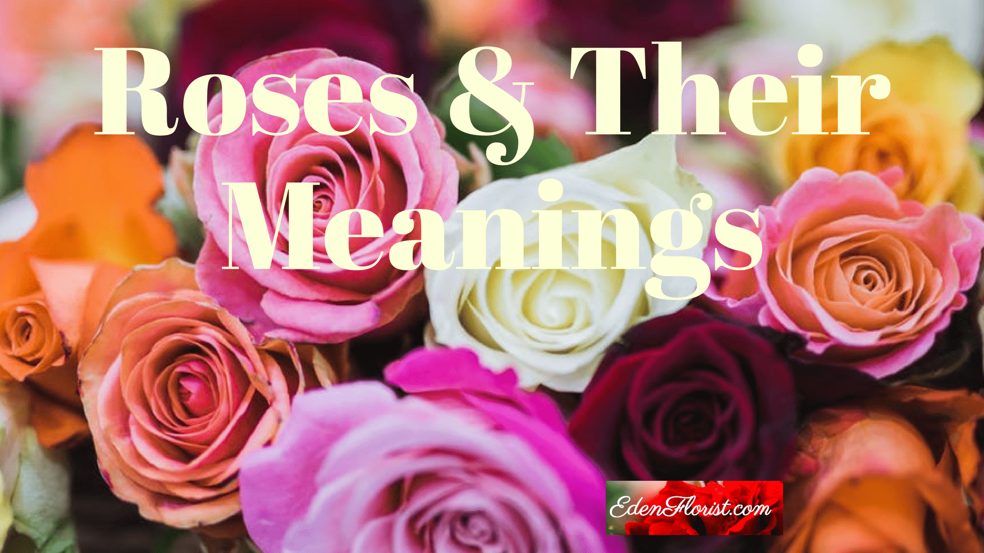 Roses and Their Meanings
