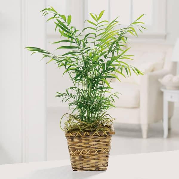 """areca palm basket"""