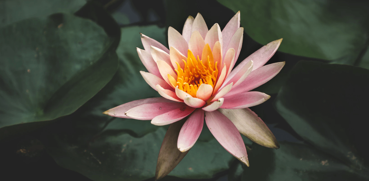 """""""Lotus Flowers Thru the Ages"""""""