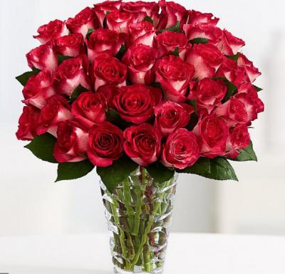 """""""4dozen bi color roses"""""""