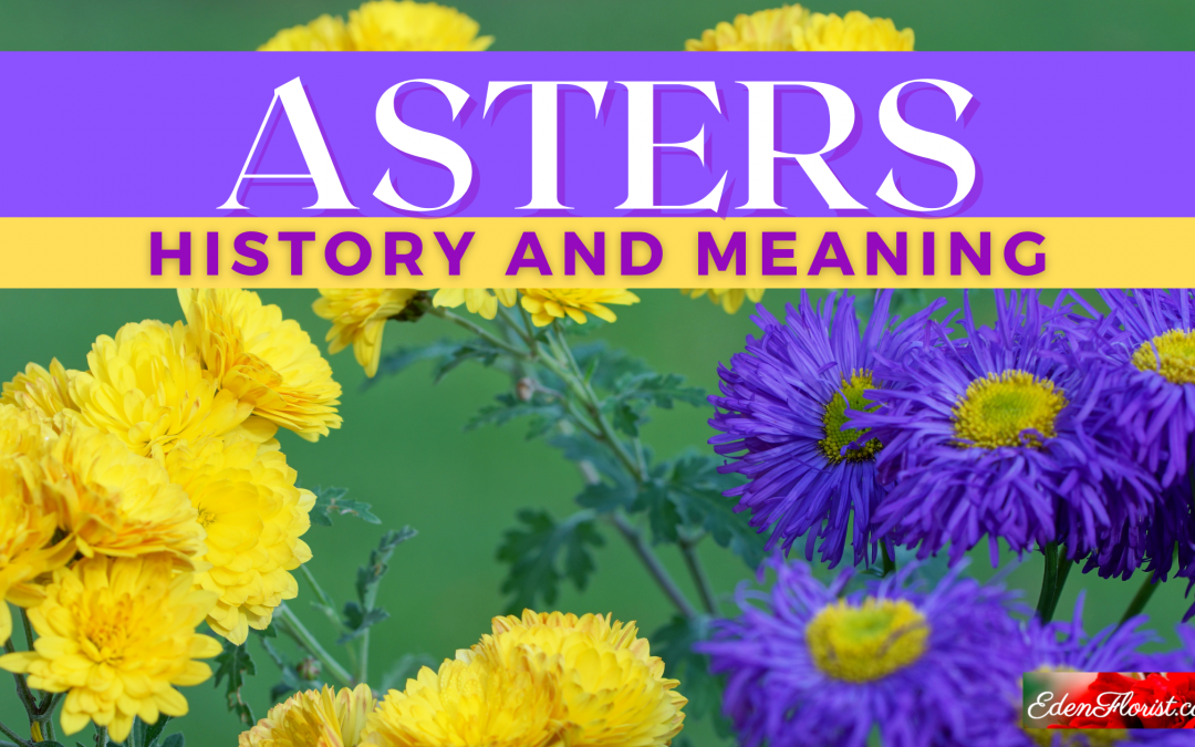 History and Meaning of Asters