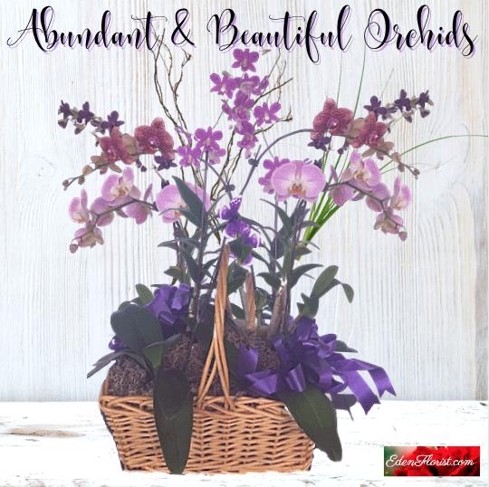 """Abundant and Beautiful Orchid Plants"""