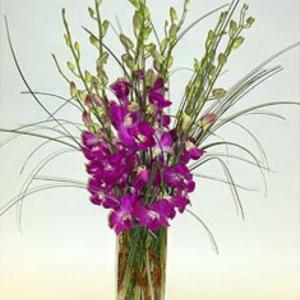 """""""Elegant Purple Orchids"""""""