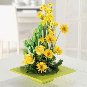 """""""Garden of Sunshine"""""""