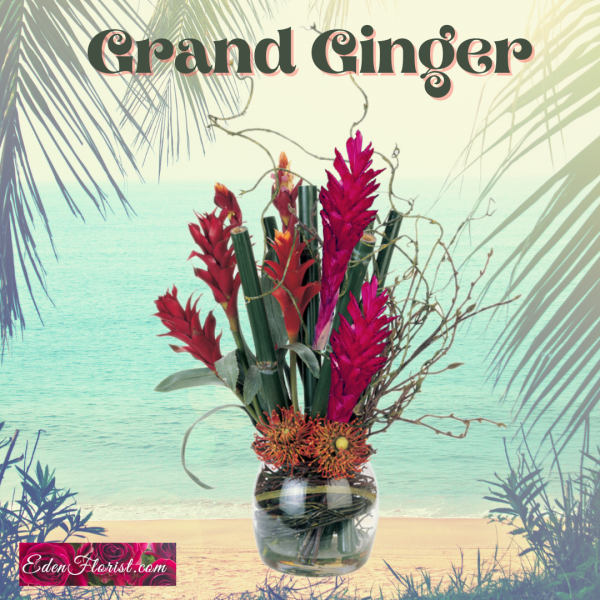 """""""Grand Ginger Tropical"""""""