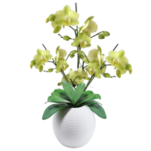 """""""Stately Green Orchids"""""""