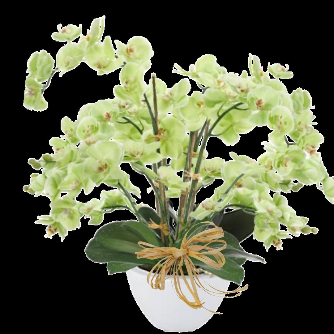 """""""Orchid Spendor """