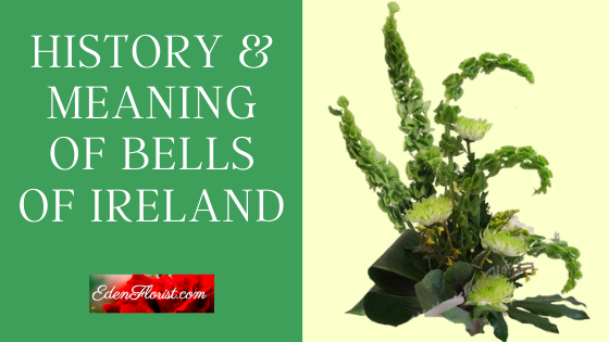 History & Meaning of Bells of Ireland