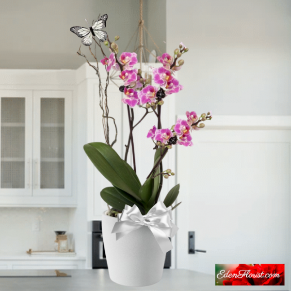"""""""Phalaenopsis Orchid Double"""""""