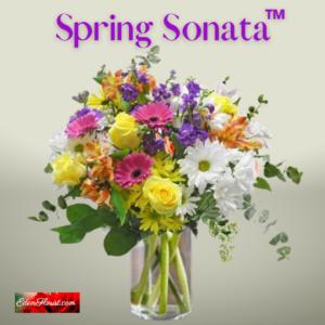 """Spring Sonata'"