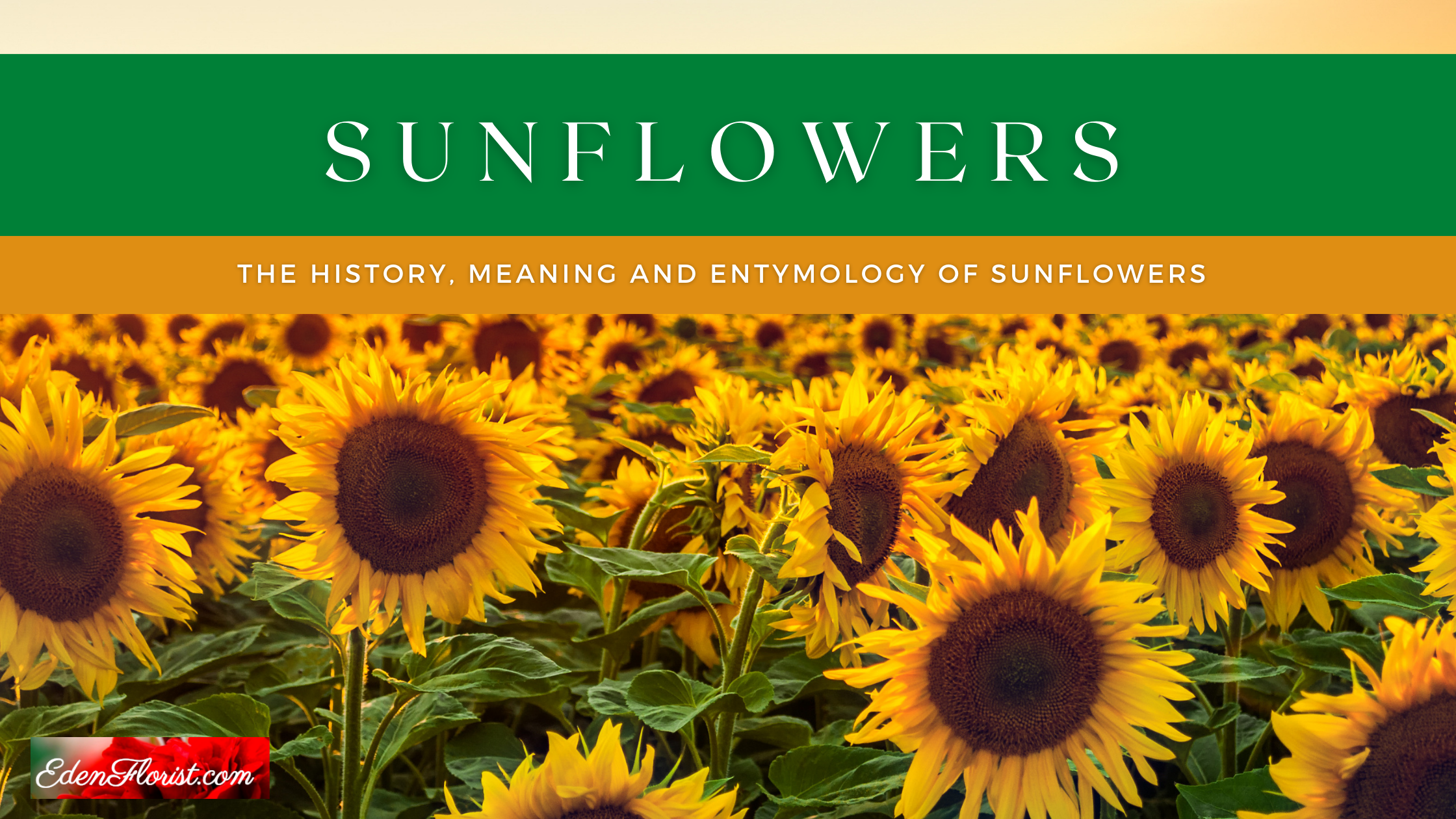 """""""Sunflowers history meaning and entymology"""""""