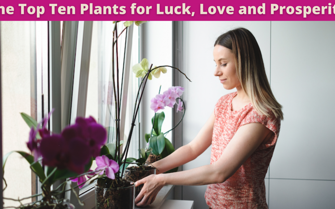 The Top Ten Plants for Luck, Love and Prosperity