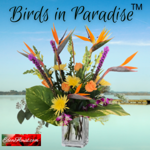 """birds in paradise"""