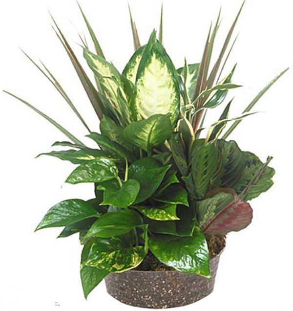 """Basket of Plants"""