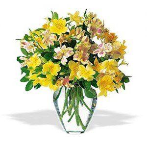"""perky peruvian lilies alstromeria in vase"""