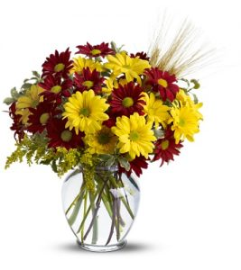 """""""fall for daisies"""""""