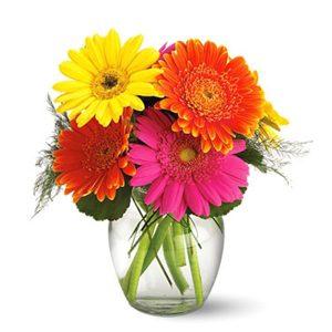 """""""Gerbera daisies in a Vase"""""""