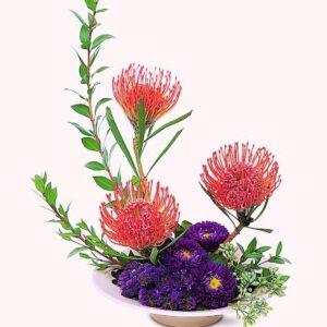 """""""protea paradise"""""""
