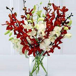 """""""elegant aranda orchids"""""""