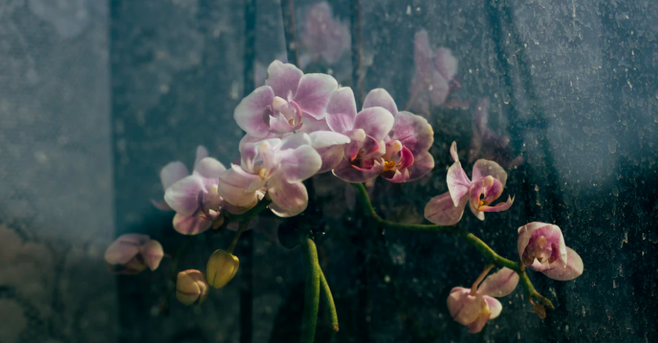 History of Orchids