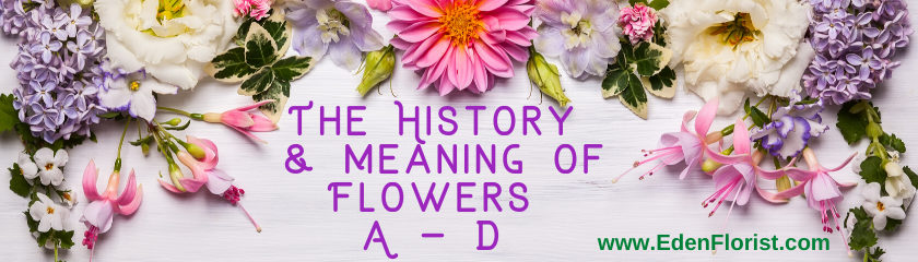 The History  & Meaning of Flowers  A – D