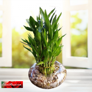 """""""Lucky Bamboo In Glass"""""""