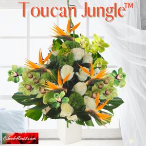 """Toucan Jungle"""